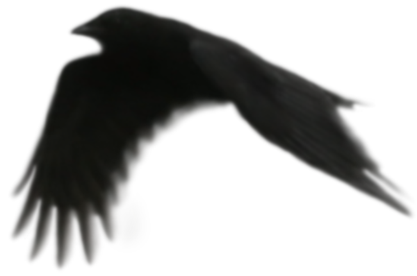 Raven 3.png