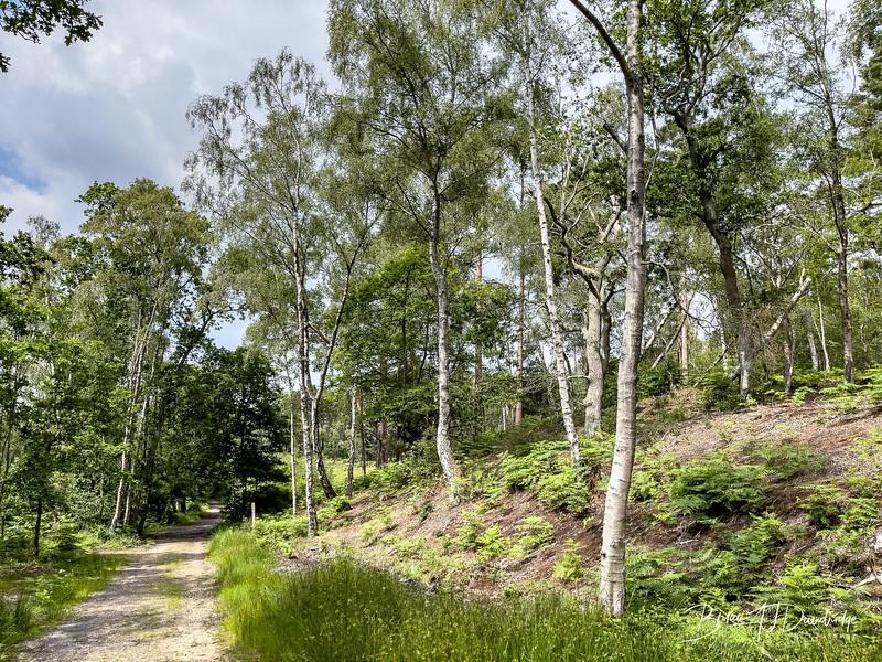Burton Mill Pond-1131-1.jpg