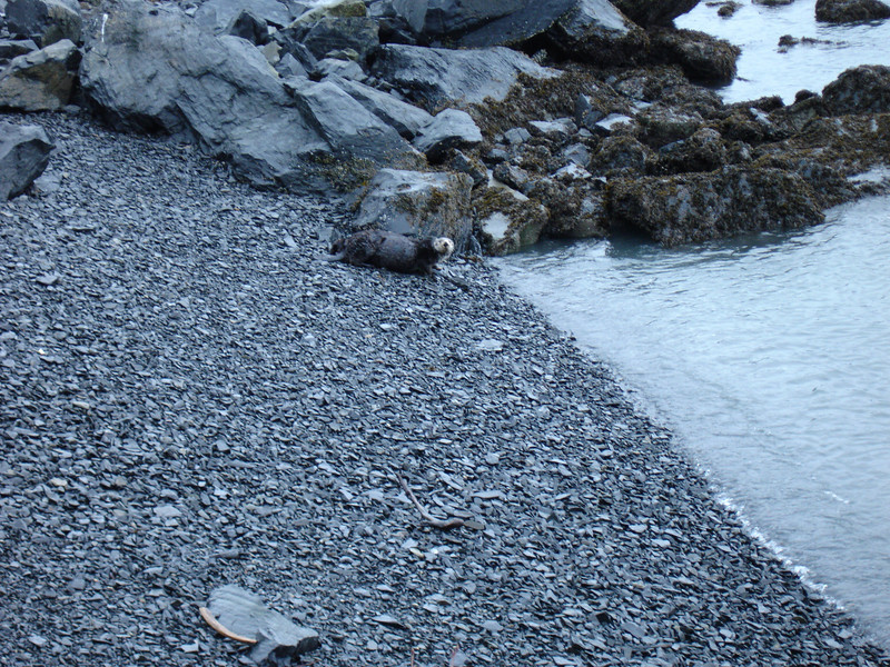 Alaska 2008 026.jpg