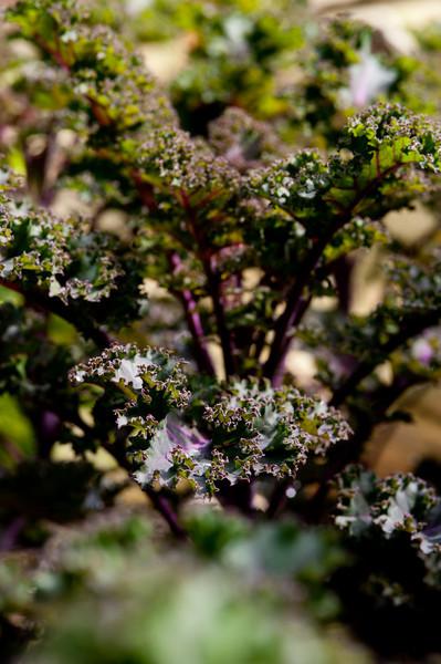 Julie's Garden-6314.jpg
