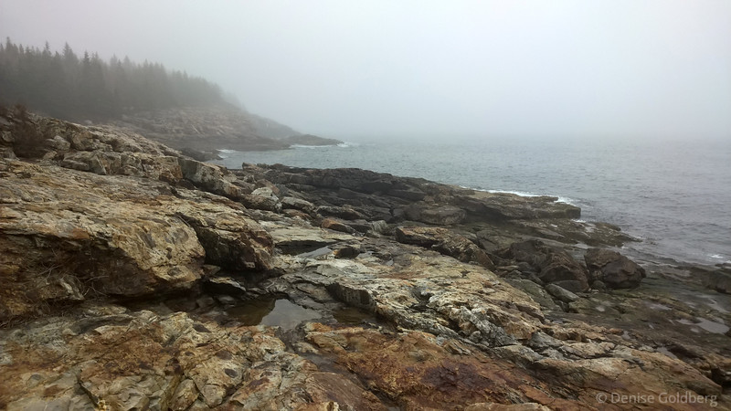 rocky coastline emerging from the fog, in Acadia National Park