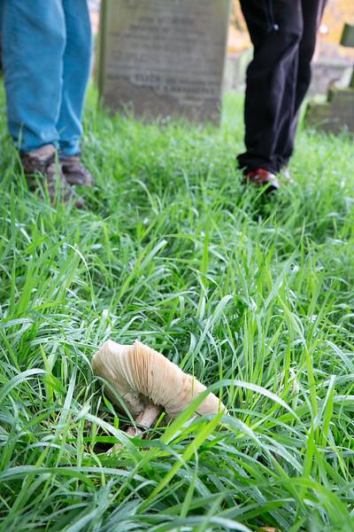 20191109- FNRC Fungi Walk - 073.jpg