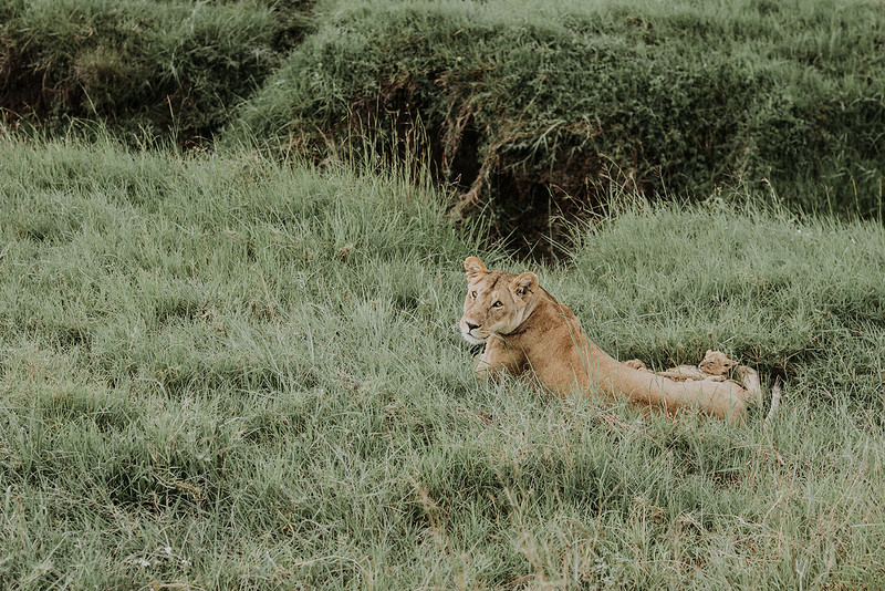 Tu-Nguyen-Destination-Wedding-Photographer-Kenya-Masai-Mara-Elopement-Doris-Sam-173.jpg