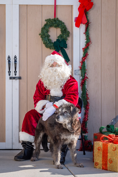 Pet Pictures With Santa-42.jpg