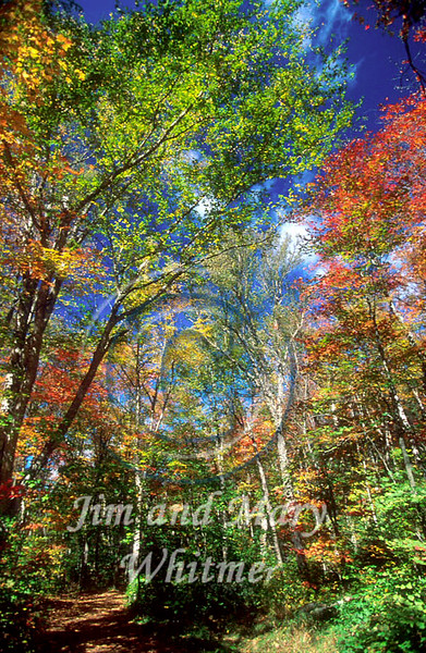 Trees_021