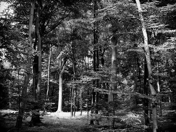 Black&White - Wald