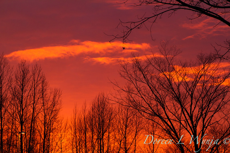 Sunset sky_0122.jpg