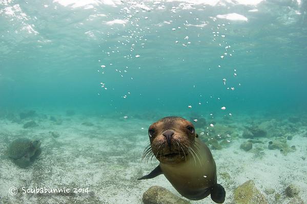 Ecuador - Galapagos - Underwater (2014)