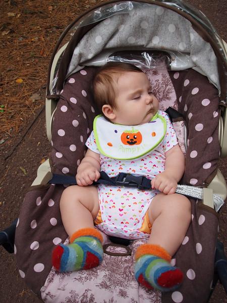 Lena sleeps through the Duke Gardens.