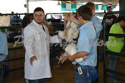"""Poultry Show Mon 15th"""