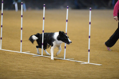 Delaware County Kennel Club AKC Agility Trial February 27-28