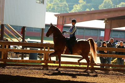 17) Show Rider W/T/C - all ages