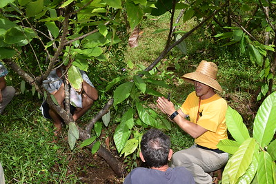 Cacao Field Day at HARC's Maunawili St. 9-2--19
