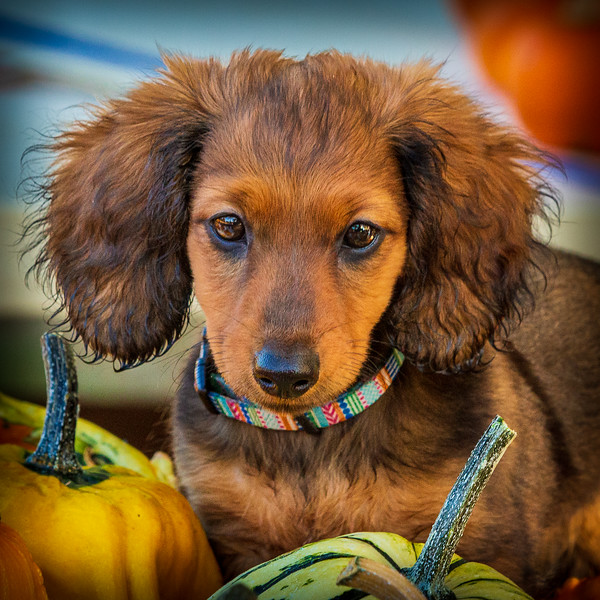 Edited in PS-528.jpg
