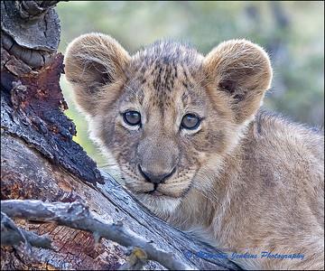 Safari 2014 in Tanzania