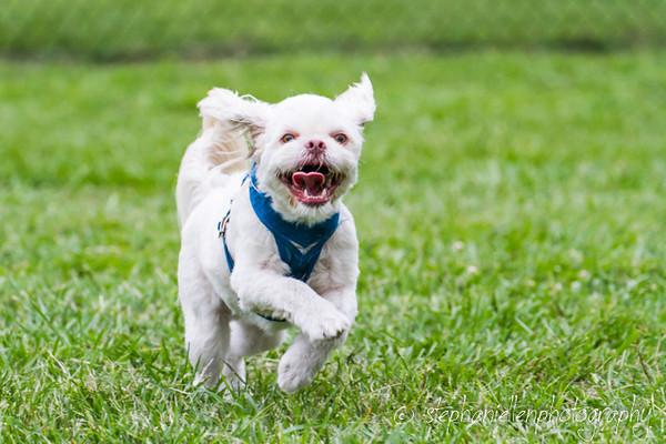 20140603barber_dog_park_Tampa_Stephaniellenphotography.com-_MG_0065.jpg