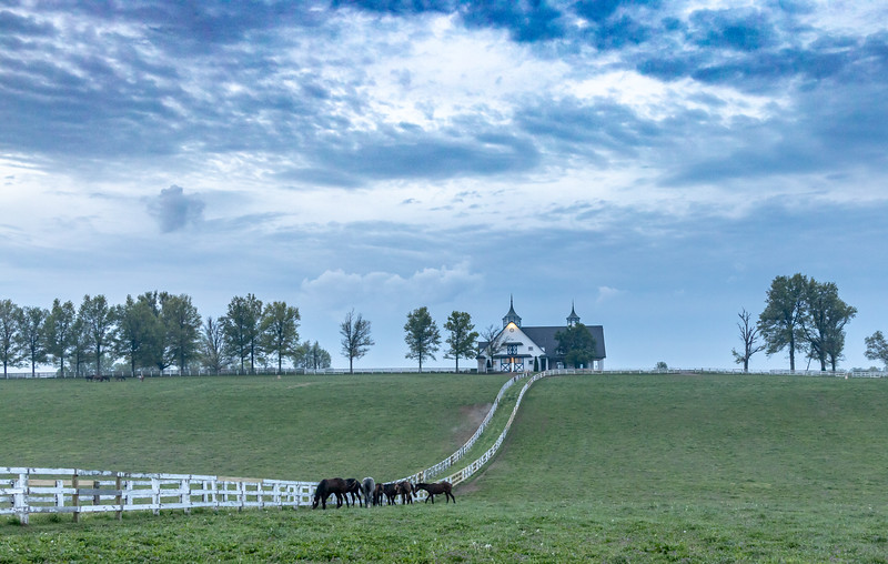Manchester Horse Farm Lexington KY  April 25, 2019   011.jpg