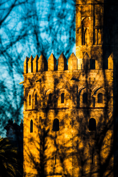 The Torre del Oro (Tower of Gold) behind a bare tree, Seville, Spain