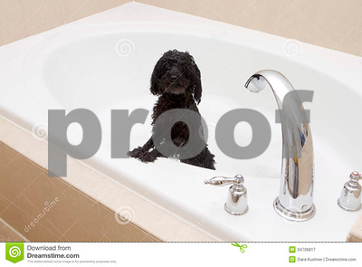 new-mexico-firefighters-rescue-poodle-with-paw-stuck-in-drain