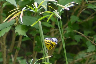 New Braunfels/Warbler Woods