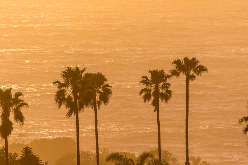 Orange colored trees, palm trees, and the Pacific ocean at sunset - 1352 Vía Romero, Palos Verdes Estates, California, United States (US)