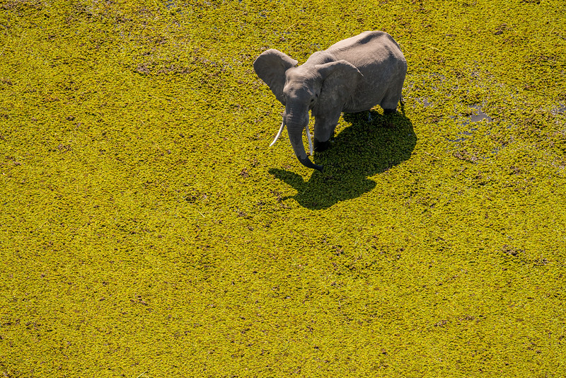 Elephant Surrounded by Green