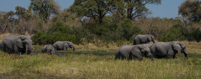 Botswana_June_2017 (3402 of 6179).jpg