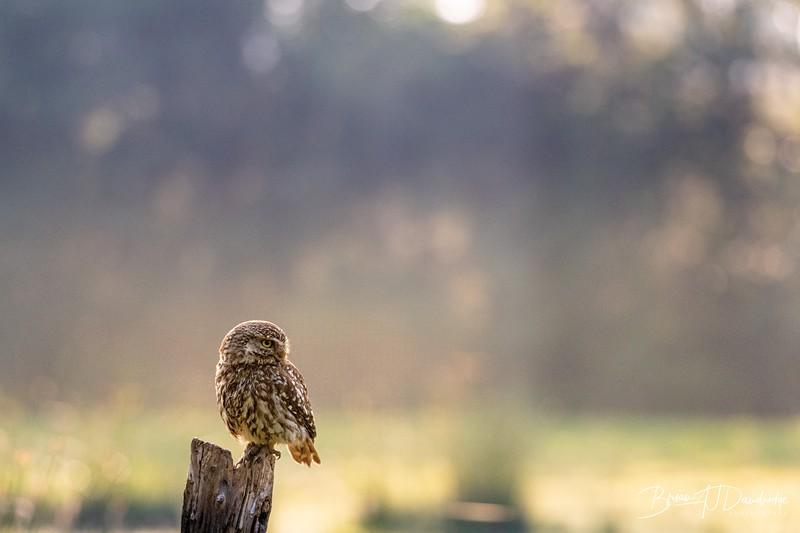 The Little Owl Shoot-6176.jpg