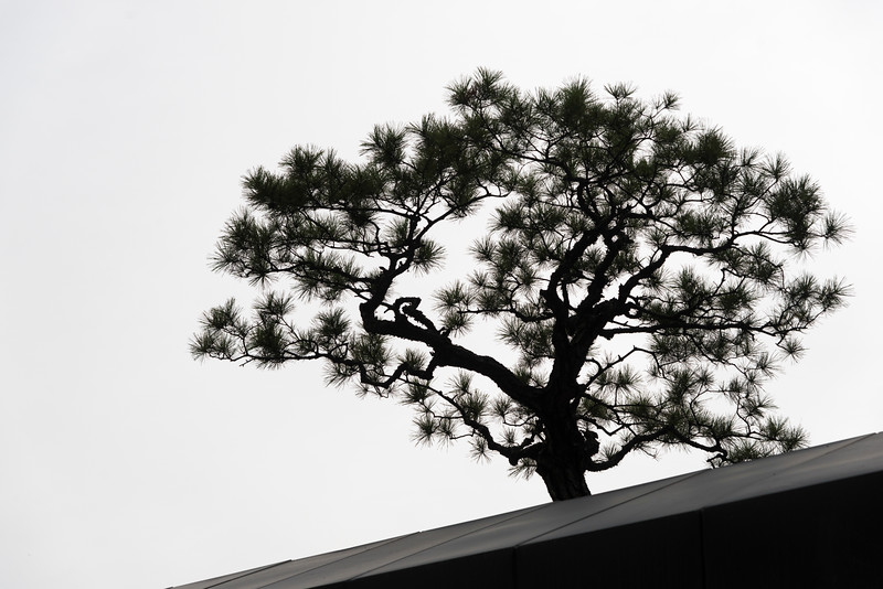 Silhouette of a tree, Seoul, South Korea