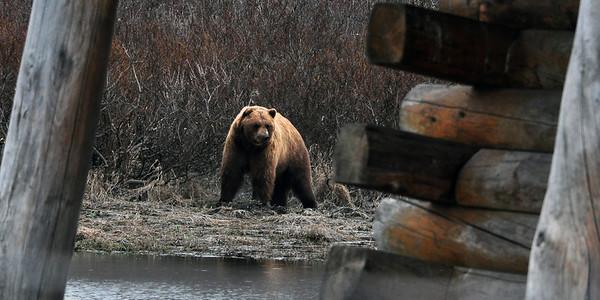 2013 - Alaska - 3 - Homer to Denali