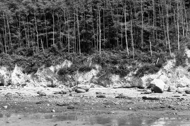 040814-002BW (Tideflats, Alders, Bluffs; Whidbey Island).jpg