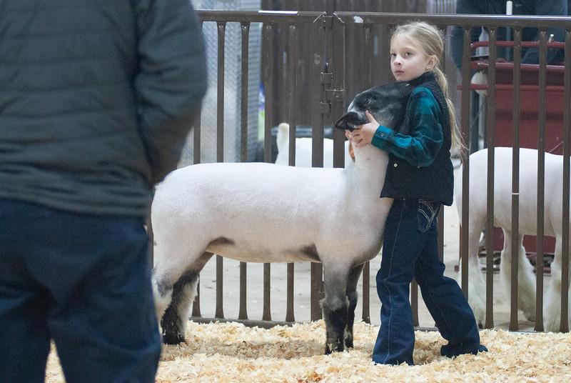 kay_county_showdown_sheep_20191207-2.jpg