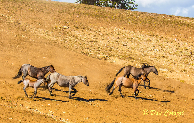 Racing for the water-1a.jpg