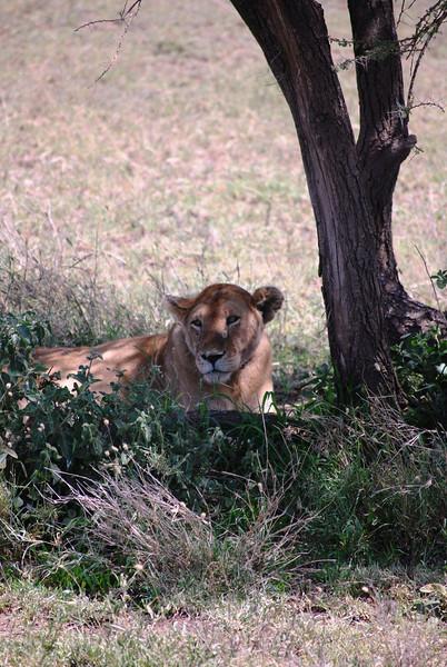Serengeti (173).JPG