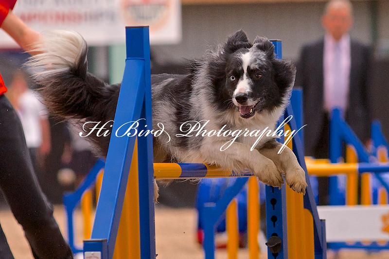 Large dog jumping  1102.jpg
