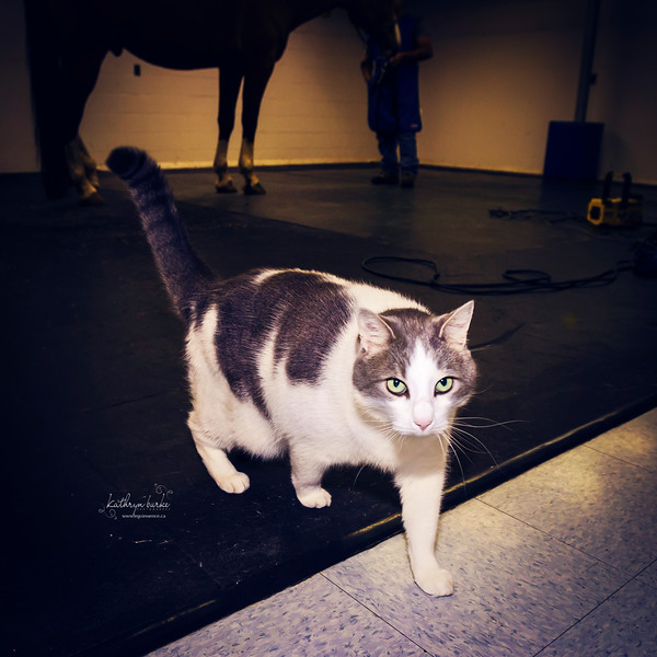Ben looking svelte.  Lab Cat.
