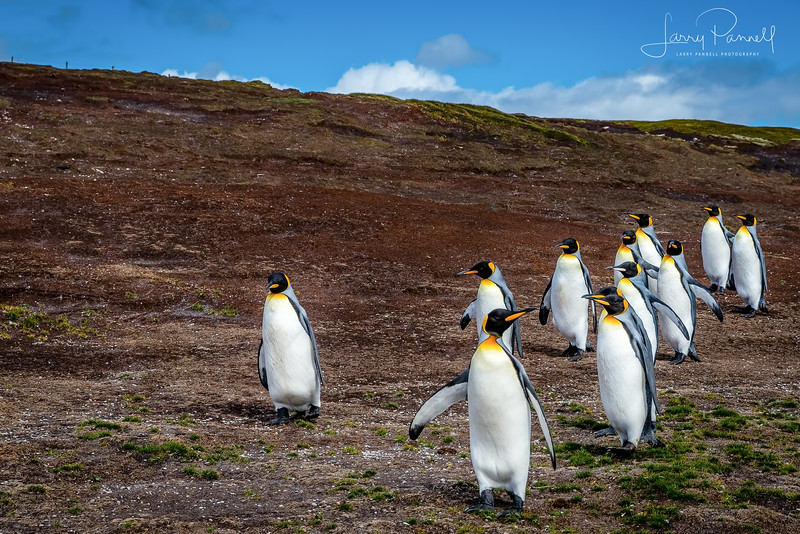 DSC _191 penquin group.jpg