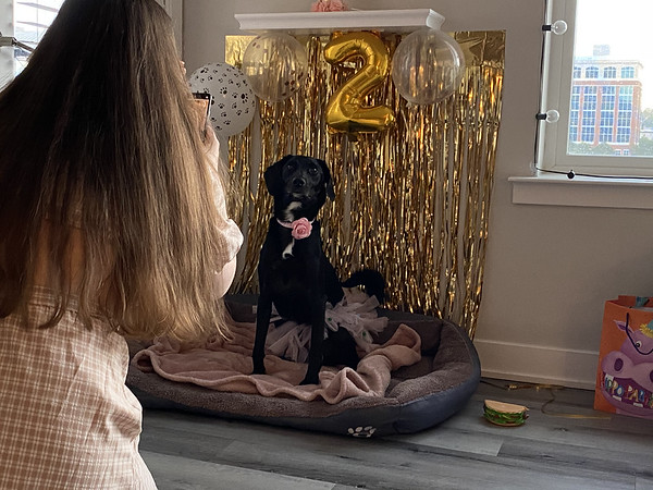 Lucy's 2nd Birthday Party