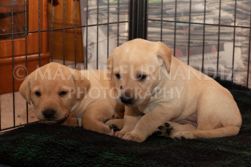 Weika Puppies 2 Mar 2019-8489.jpg