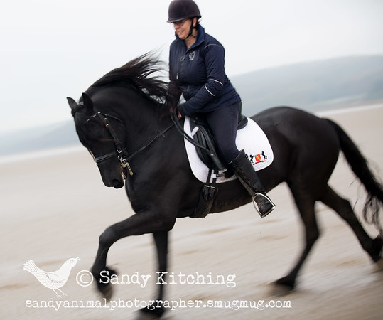 Friesian beach ride Nov 2015