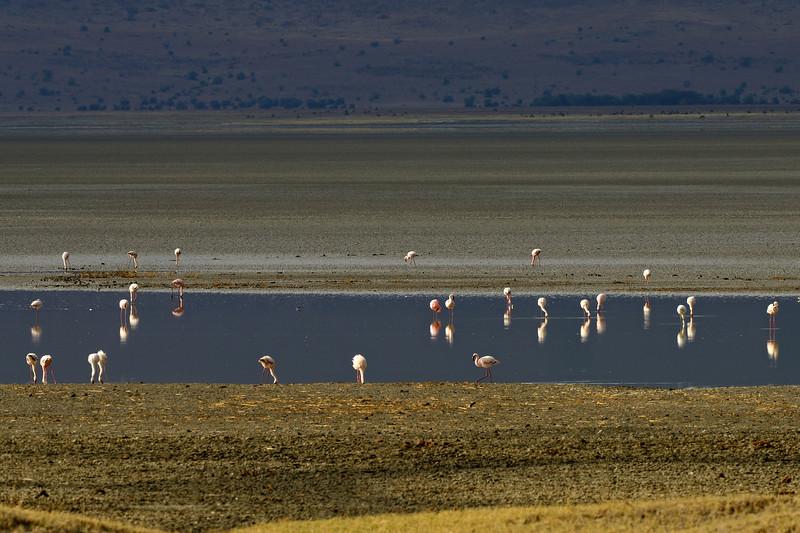 Flamingo-Scape.jpg