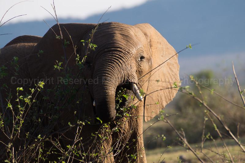 Madikwe-45.jpg