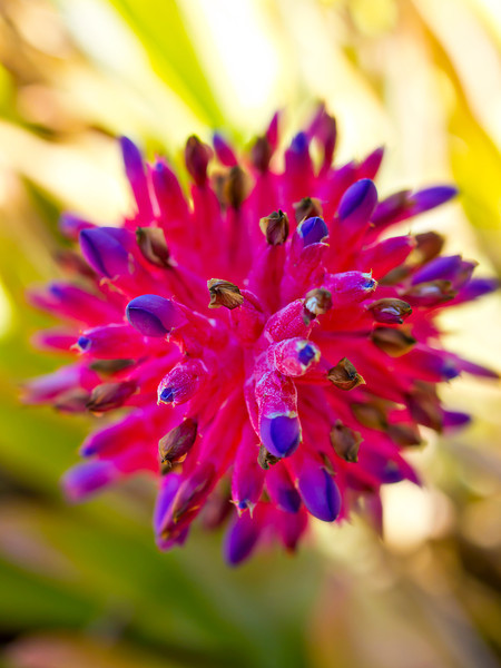 cactusgarden7.jpg