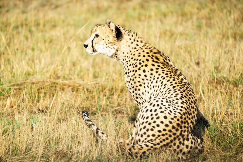 LeopardHills-20171022-0237.jpg