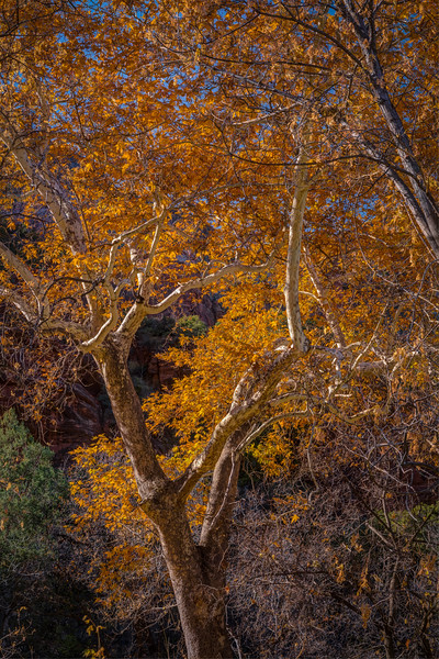 Sedonaa Thanksgiving Fall (15).jpg