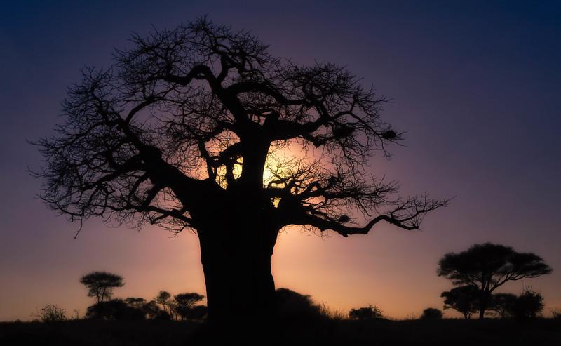 Baobab sunset, Tarangire National Park
