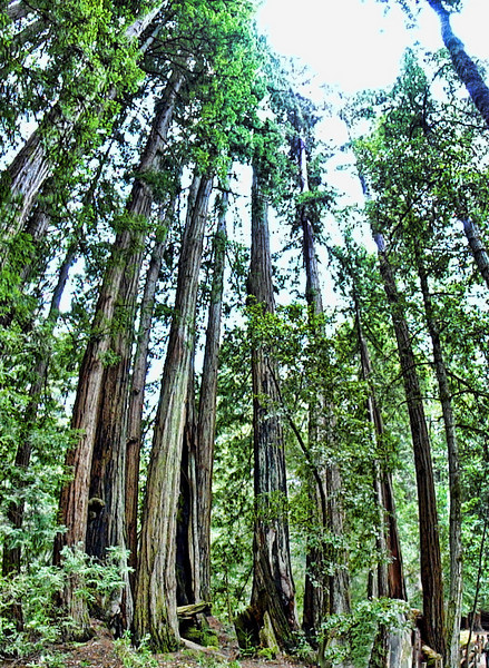 Big Basin State Park Photography