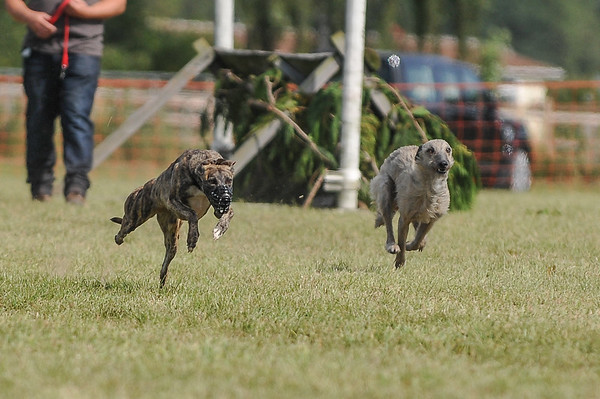 Ross Country Fair (Coursing)