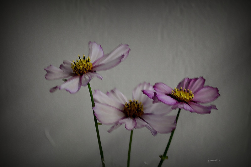 three wallflowers 9-20-2012.jpg