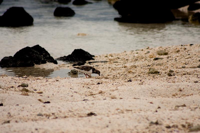 Digging Bird : Journey into Genovesa Island in the Galapagos Archipelago